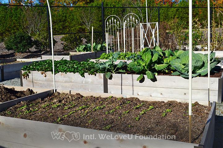 WeLoveU volunteers beautify Carpenter Park Community Garden in NC.
