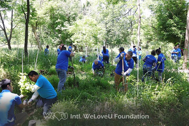 Swarm of WeLoveU volunteers planting trees in Stony Brook