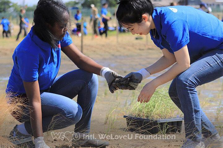 Two WeLoveU volunteers planting marsh plugs