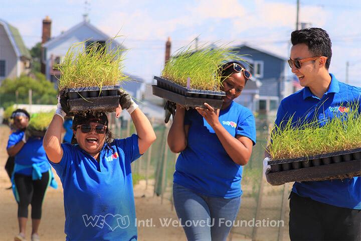 WeLoveU volunteers carrying cartridges of marsh plants