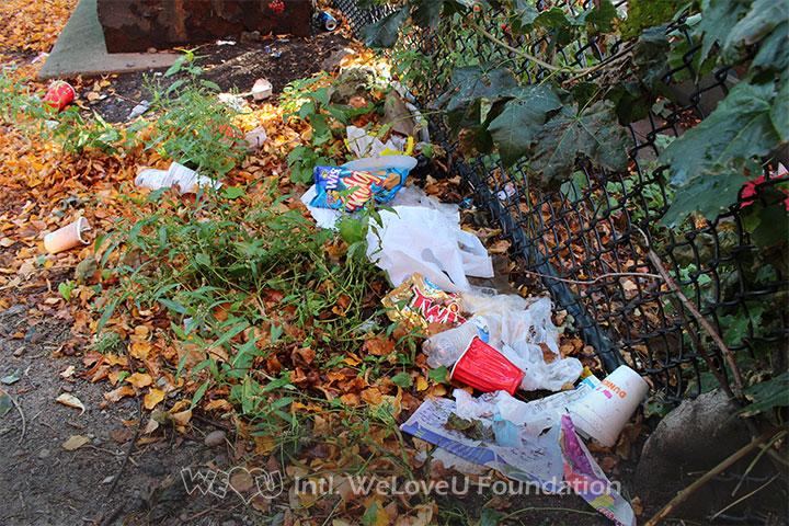 litter, ceylon park, trash, boston