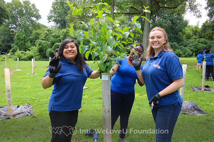 Volunteers working together for the tree's health